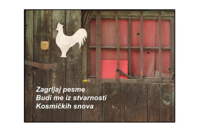 Nataša Stanić, Haiga17