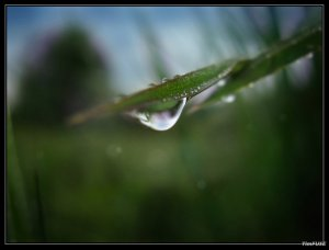 crying_grass_by_timfuse